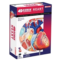 4D Vision Human Heart Anatomy Model