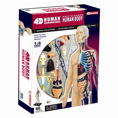 4D Vision Half Cleared Body Human Anatomy Model