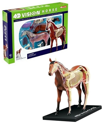 4D Vision Horse Anatomy Model