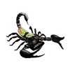 4D Vision Scorpion Anatomy Model