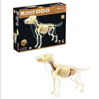 4D Vision Full Skeleton Dog Anatomy Model
