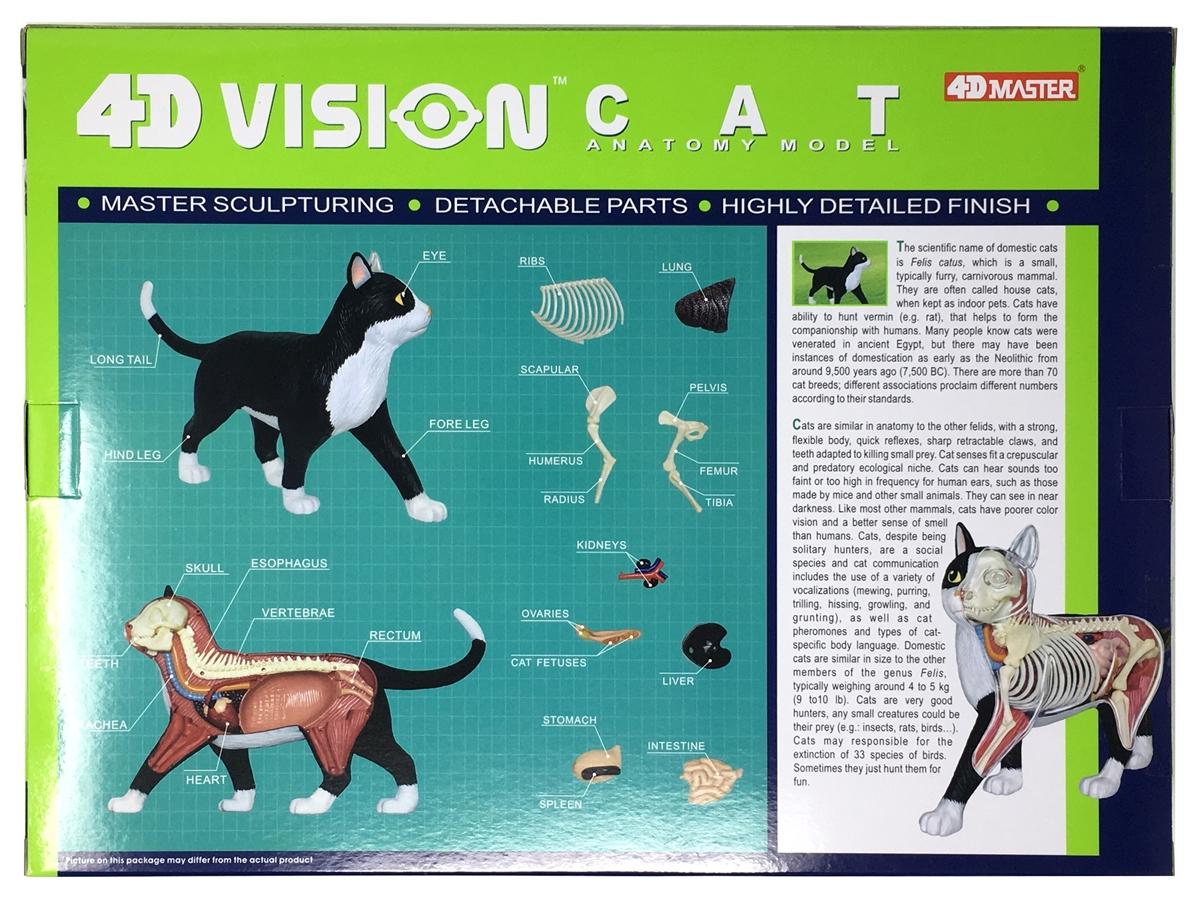 4D Vision Cat Anatomy Model