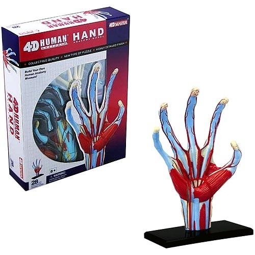 4d Vision Human Hand Anatomy Model