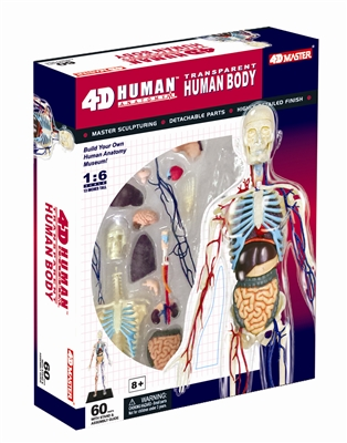 "4D Vision 13"" Transparent Human Anatomy Model"