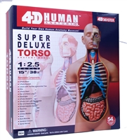 4D Vision Deluxe Human Anatomy Torso Model