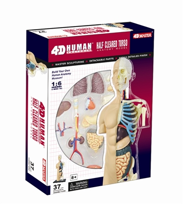 4D Vision Half Cleared Torso Anatomy Model