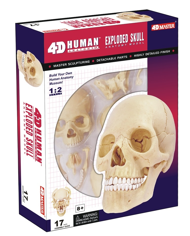4D Vision Exploded Human Skull Anatomy Model