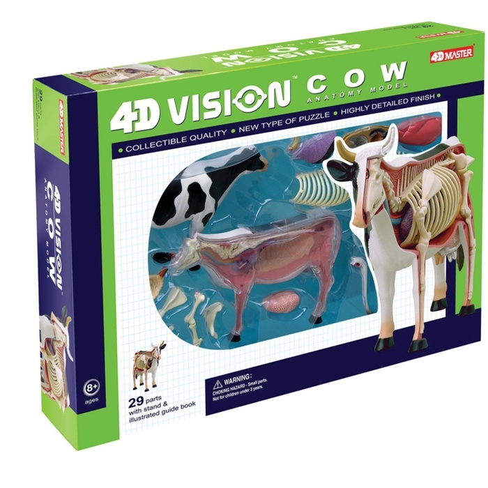 4D Vision Cow Anatomy Model