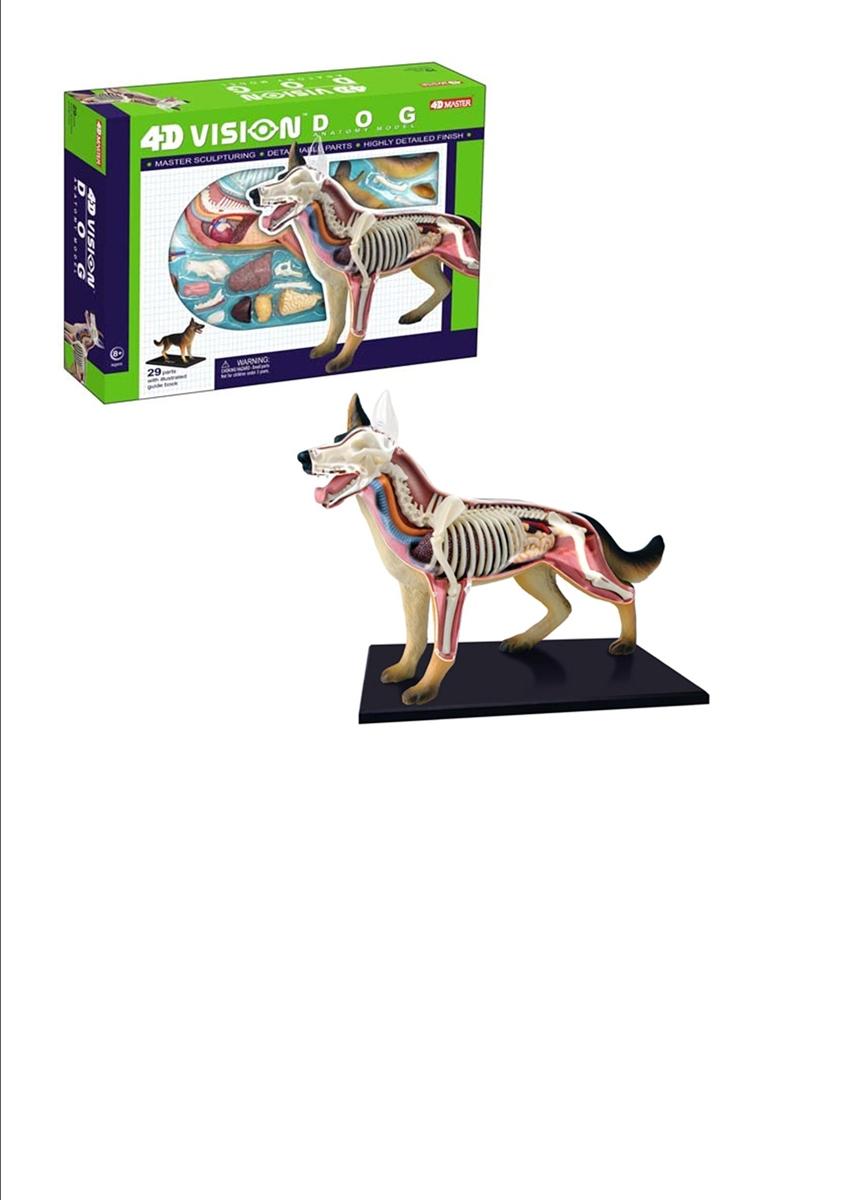 4D Vision Dog Anatomy Model