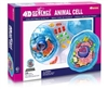 4D Science Animal Cell Anatomy Model